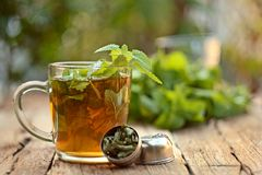 Cup of melissa tea royalty free stock images