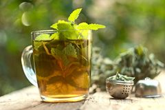 Cup of melissa tea royalty free stock photo