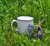 Cup of milk with flower bunch in summer grass Stock Images