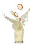 Cup of milk splashing with cookie falling Stock Photos