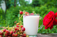 Cup of milk and  strawberries Royalty Free Stock Photography