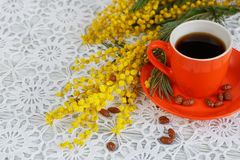 Cup and mimosa Stock Image