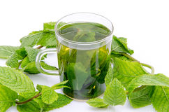 Cup of mint tea in the middle of fresh mint Stock Photography