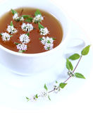 Cup Of Green Tea Royalty Free Stock Photos