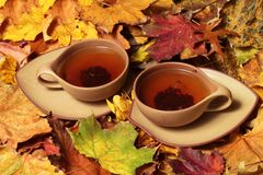 Free Cup Of Tea Royalty Free Stock Image - 16624336