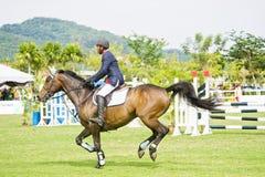 Cup primera Equestrian Show Jumping Fotografía de archivo
