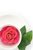 Cup with red rose. White cup with rose and green leafs on a plate Royalty Free Stock Image