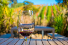 Cup of red wine on vineyard background in waiheke island in auckland, in a beautiful blue sky in summer time Royalty Free Stock Image
