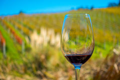 Cup of red wine on vineyard background in waiheke island in auckland, in a beautiful blue sky in summer time Royalty Free Stock Images