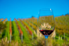 Cup of red wine on vineyard background in waiheke island in auckland, in a beautiful blue sky in summer time Stock Photos