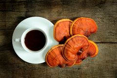 Cup of reishi tea and fresh Lingzhi mushroom. Cup of reishi tea and fresh Lingzhi mushroom on dark wooden floor. Ganoderma Lucidum. Chinese traditional medicine royalty free stock images