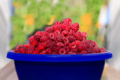 Cup of ripe raspberry. Cupful of ripe juicy raspberries on the table Stock Images