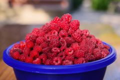 Cup of ripe raspberry Stock Image