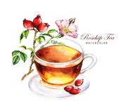 Cup of the rosehip tea and dog-rose branch with flowers and fruits isolated on the white background. Hand-drawn watercolor illustration of the tea. Cup of the stock illustration