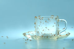 Cup and saucer with ants. An empty cup and saucer covered by ants. Ideal concept for diabetes awareness Stock Photography