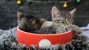 Cup with sleeping kittens surrounded by holiday decorations stock video footage