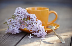 Cup with a spoon and an inflorescence of a lilac lilac Royalty Free Stock Photo