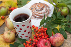 A cup of strong black tea, sweet bun with raisins, ash berries, apples and colorful autumn leaves on a stone surface Royalty Free Stock Image