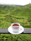 Cup of tea. Background of tea plantations Royalty Free Stock Image