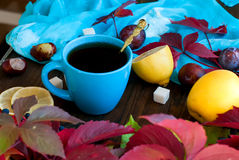 Cup of tea with autumn leaves of wild grapes Royalty Free Stock Photography