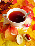 Cup of tea autumn still life Stock Image