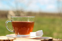 A cup of tea in the background of a garden. A cup of tea in the background of a spring garden with sugar Stock Photo