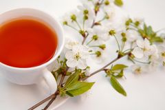 Cup with tea and a blooming twig of cherry royalty free stock photography