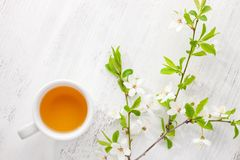 Cup of tea and branches of blossoming cherry on old wooden table. Cup of  tea and  branches of blossoming  cherry   on old  wooden  table Royalty Free Stock Images