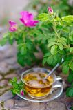 Cup of tea with canker-bloom Royalty Free Stock Photo