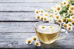 Cup of tea with chamomile flowers royalty free stock images