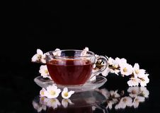 Cup of tea and cherry branch.  royalty free stock photography