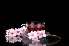 Cup of tea and cherry branch. On black royalty free stock image