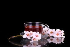 Cup of tea and cherry branch. On black royalty free stock photos