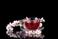 Cup of tea and cherry branch. Isolated on black background royalty free stock photo