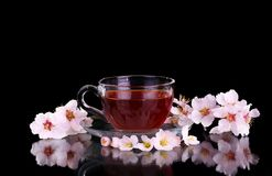 Cup of tea and cherry branch. Isolated on black background stock image