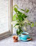 Cup of tea, cookies, bird cherry bouquet in a glass vase on a gray table. The Berlin cookies. Spring. Tea drinking. Front view royalty free stock image