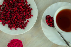 Cup of tea, cranberries on the plate Royalty Free Stock Image