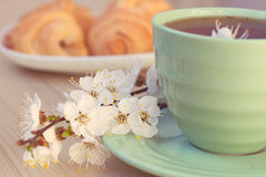 Cup of tea and croissants near blossoming branches Royalty Free Stock Photo
