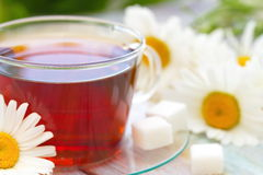 Cup of tea and daisy Stock Photography