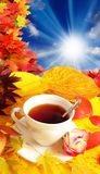 Cup of tea and fall background Royalty Free Stock Photos