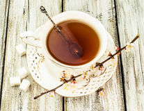 Cup of tea with flowering branches apricots Stock Image