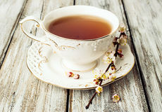 Cup of tea with flowering branches apricots Stock Images