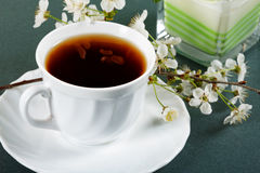 Cup of tea with flowers of a cherry Royalty Free Stock Images
