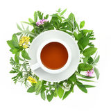 Cup of tea with fresh herbs and spices. Around it stock images