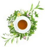 Cup of tea with fresh herbs Stock Photos