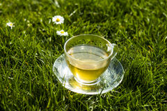 Cup of tea in the grass on sunny day. Close up of cup of tea in the grass on sunny day Stock Photography