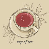 Cup of tea. Illustration with cup of tea on color background Stock Images