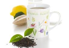 Cup of tea isolate Stock Photos