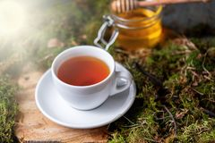 Cup of tea with lemon, ginger and honey on wood and moss in the forest stock images