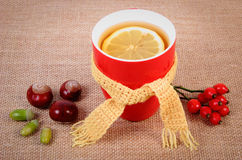 Cup of tea with lemon wrapped woolen scarf and autumn decoration Stock Photos